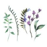 Naturalnej akwareli Botaniczny set zieleń liście, Wildflowers, gałązki royalty ilustracja