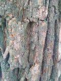 Naturalnej jaskrawej drewnianej tekstury popielaty kolor zdjęcie stock