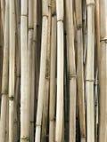 Naturalnej Suchej Bambusowej trzciny kija bambusa Bambusowy słup Zdjęcia Royalty Free