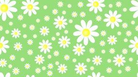 Naturalnej wiosny natury wzoru bezszwowa zieleń z białego kwiatu chamomile Obraz Stock