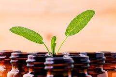 Naturalnej zdrojów składników mędrzec istotny olej dla aromatherapy z Obraz Stock