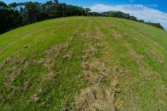 Naturalnej zieleni trawy Naszywany pole Obrazy Royalty Free