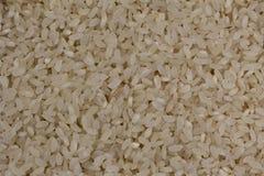 Naturalni biali ryż Obraz Royalty Free
