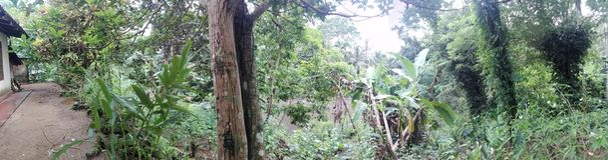 Naturalni drzewa są w terenie Fotografia Stock