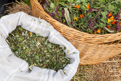 Naturalni herbaciani ziele Zdjęcia Royalty Free