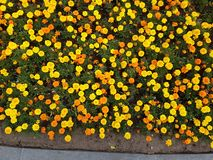 Naturalni jaskrawi kwiaty fotografia stock