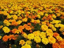 Naturalni jaskrawi kwiaty zamknięci w górę fotografia stock