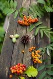 Naturalni jesień elementy na starym drewnianym tle: Obrazy Royalty Free