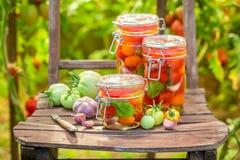 Naturalni kiszeni pomidory na starym krześle w szklarni zdjęcie stock