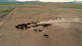 Naturalni konie Dzicy konie Kayseri pojęcie w Turcja, wolność, siła, Ä°ndependence i prędkość, zbiory