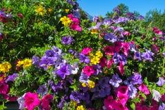 Naturalni kwiaty Fotografia Royalty Free