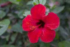 Naturalni kwiaty Zdjęcie Stock