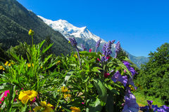 Naturalni kwiaty blisko góry Fotografia Royalty Free