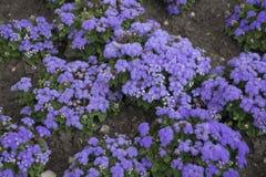 Naturalni kwiaty zamknięci up na ulicach - świezi kwiaty, ogrodowa dekoracja Fotografia Stock