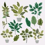 Naturalni liście i houseplant deseniowy tło Zdjęcie Royalty Free