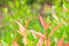 Naturalni liście, mali liście, pomarańcze i zieleń, obraz stock