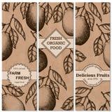 Naturalni organicznie tropikalnych owoc pionowo sztandary ustawiający pociągany ręcznie pomelo projektują szablon Obraz Royalty Free