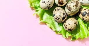 Naturalni przepiórek jajka na zielonej sałaty sałatkowym liściu na różowym tle Flatlay, odgórny widok, minimalny kopii prz obrazy royalty free