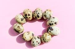 Naturalni przepiórek jajka w owalnym kształcie na różowym tle Flatlay, odgórny widok, minimalna kopii przestrzeń obraz royalty free