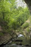Naturalni rzeczni drzewa zdjęcie royalty free