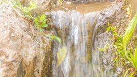 Naturalni szczegóły Od madery Zdjęcie Royalty Free
