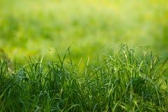 Naturalni traw tła z piękna bokeh Obrazy Royalty Free