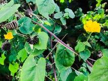 Naturalni Urodzeni kwiaty Fotografia Royalty Free
