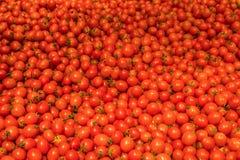 Naturalni warzywa na rynku kontuarze Czereśniowi Mali pomidory zdjęcie royalty free