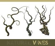 naturalni winogrady ilustracji