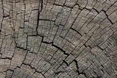 naturalni wzory texture drewno fotografia royalty free
