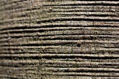 naturalni wzory texture drewno zdjęcie royalty free
