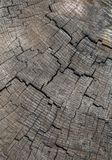 naturalni wzory texture drewno obraz stock