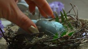 Naturalnie farbujący jajka kłaść w wielkanocy gniazdeczku zbiory wideo