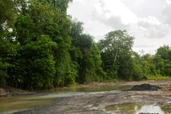 Naturalnie Rosnąć rośliny w Bulatukan rzece, Nowy Clarin, Bansalan, Davao Del Sura, Filipiny obraz stock