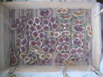 naturalnie wysuszone figi pod lata słońcem Obrazy Royalty Free