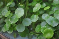 Naturalnie zieleń Zdjęcie Stock