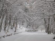 Naturalny śnieżny łuk nad droga Zdjęcia Stock