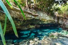 Naturalny basen przy Cristalino cenote blisko Tulum, Meksyk obraz stock