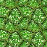 Naturalny bezszwowy wzór zieleń kamienie z stokrotkami i trawą ilustracji