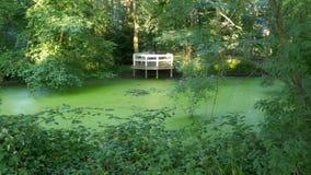 Naturalny biotop, romantyczny taras przegapia zielonego duckweed stawowego Lemna Magnoliopsida zdjęcia stock