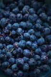 Naturalny czarnej jagody tło Świeży Zdrowy czarnej jagody owoc tekst Fotografia Royalty Free