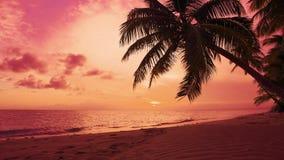 Naturalny czerwień świt Seascape świt nad morzem Pomarańczowe chmury w czerwonym nieba słońca świcie na palmach wyrzucać na brzeg zdjęcie wideo