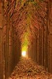 Naturalny drzewny tunel fotografia stock