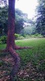 naturalny Drzewo zdjęcia stock
