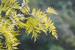 Naturalny drzewo Zdjęcia Royalty Free