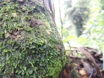 Naturalny drzewo woda Obrazy Stock