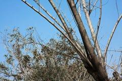 Naturalny drzewo z nieba tłem Obrazy Royalty Free