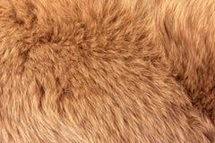 Naturalny futerko czerwony biegunowy lisa zbliżenie zdjęcia royalty free
