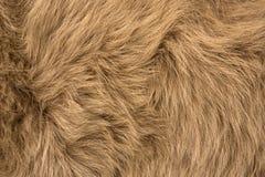 Naturalny futerko czerwony biegunowy lisa zbliżenie fotografia stock