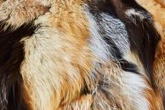 Naturalny futerko, tekstura, tło Obrazy Stock
